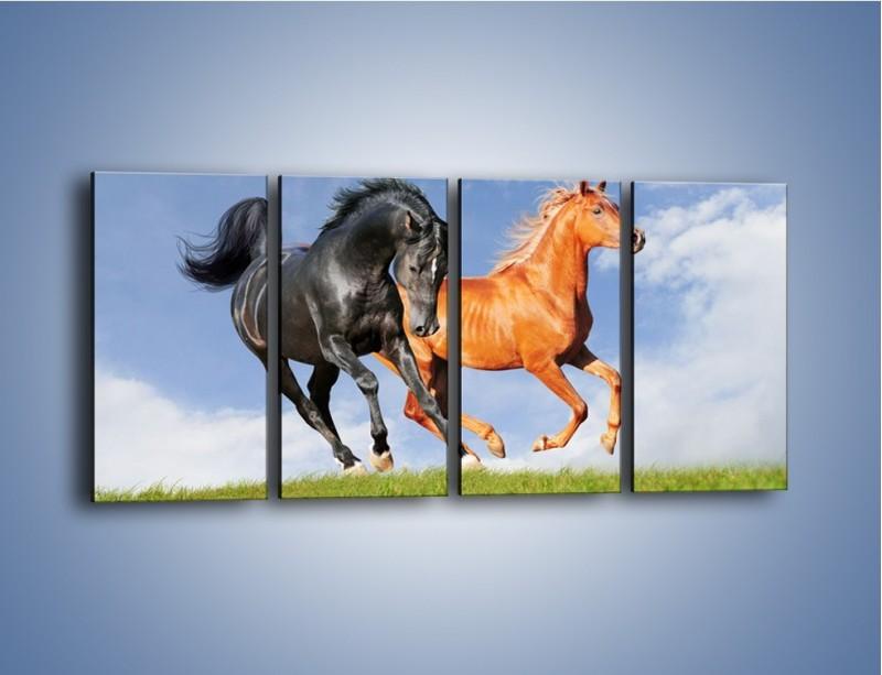 Obraz na płótnie – Czarny rudy i koń – czteroczęściowy Z241W1