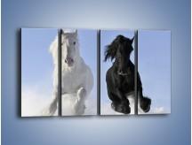 Obraz na płótnie – Czarno-biały wyścig konny – czteroczęściowy Z263W1