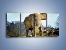 Obraz na płótnie – Ciężkie życie słonia – czteroczęściowy Z273W1