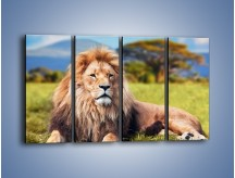 Obraz na płótnie – Dostojny lew na sawannie – czteroczęściowy Z282W1