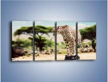 Obraz na płótnie – Cała zwinność geparda – czteroczęściowy Z315W1