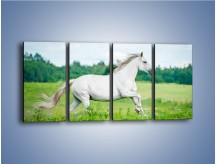 Obraz na płótnie – Biały koń i leśna polana – czteroczęściowy Z317W1