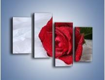 Obraz na płótnie – Bordowa róża na białej pościeli – czteroczęściowy K1023W2