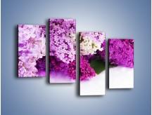 Obraz na płótnie – Bez w różnych kolorach – czteroczęściowy K389W2