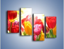 Obraz na płótnie – Bajecznie słoneczne tulipany – czteroczęściowy K428W2