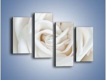 Obraz na płótnie – Biel róży za dnia – czteroczęściowy K709W2