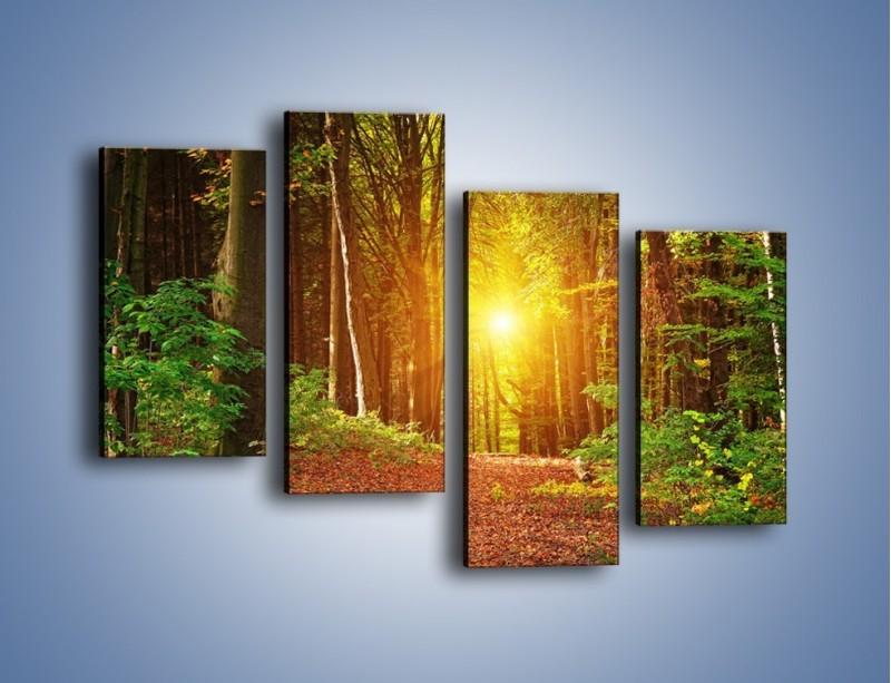 Obraz na płótnie – Polski krajobraz leśny – czteroczęściowy KN1257AW2