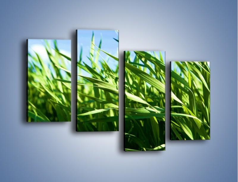 Obraz na płótnie – Wiatr w łodygach – czteroczęściowy KN176W2