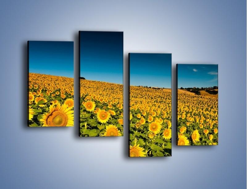 Obraz na płótnie – Słonecznikowe uśmiechnięte główki – czteroczęściowy KN205W2