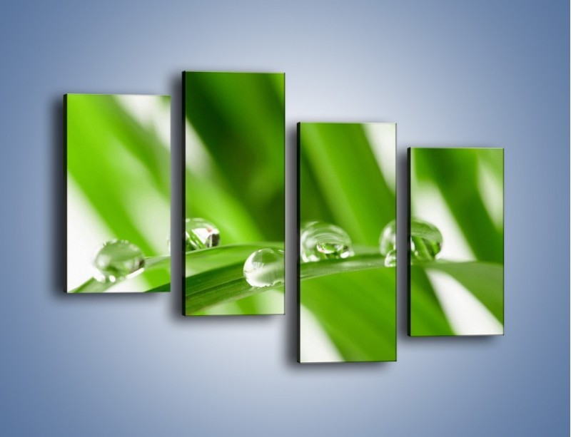 Obraz na płótnie – Krople rosy na liściu – czteroczęściowy KN339W2