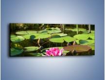 Obraz na płótnie – Ciemno-różowy nenufar na wodzie – jednoczęściowy panoramiczny K014