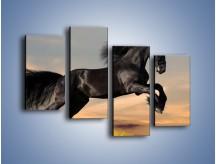 Obraz na płótnie – Czarny koń w galopie – czteroczęściowy Z008W2