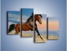 Obraz na płótnie – Brązowy koń na pustyni – czteroczęściowy Z011W2
