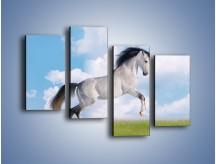 Obraz na płótnie – Białe obłoki i koń – czteroczęściowy Z019W2