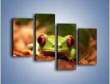 Obraz na płótnie – Bystre oczka małej żabki – czteroczęściowy Z023W2