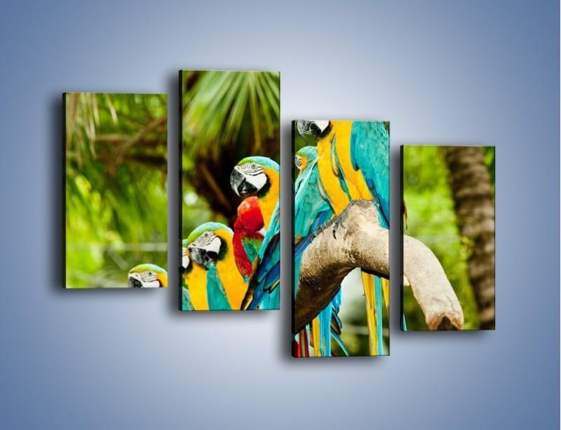 Obraz na płótnie – Kolorowe papugi w szeregu – czteroczęściowy Z029W2