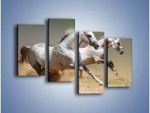 Obraz na płótnie – Białe konie w pustynnym galopie – czteroczęściowy Z055W2