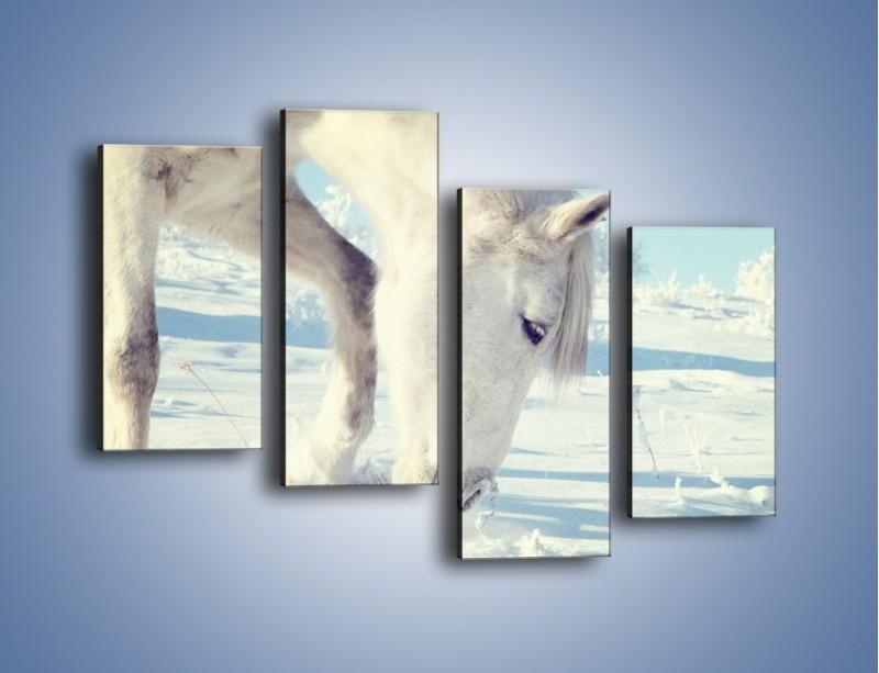 Obraz na płótnie – Arab w śnieżnym puchu – czteroczęściowy Z144W2