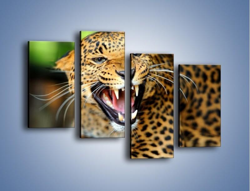 Obraz na płótnie – Jaguar z pazurem – czteroczęściowy Z184W2