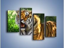 Obraz na płótnie – Cała duma tygrysa – czteroczęściowy Z199W2