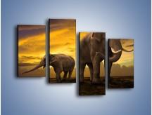 Obraz na płótnie – Ciekawość małego słonika – czteroczęściowy Z212W2