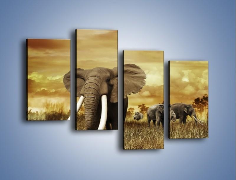 Obraz na płótnie – Drogocenne kły słonia – czteroczęściowy Z214W2