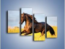 Obraz na płótnie – Dziki koń i jego mięśnie – czteroczęściowy Z232W2