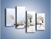 Obraz na płótnie – Białe konie i biały śnieg – czteroczęściowy Z239W2