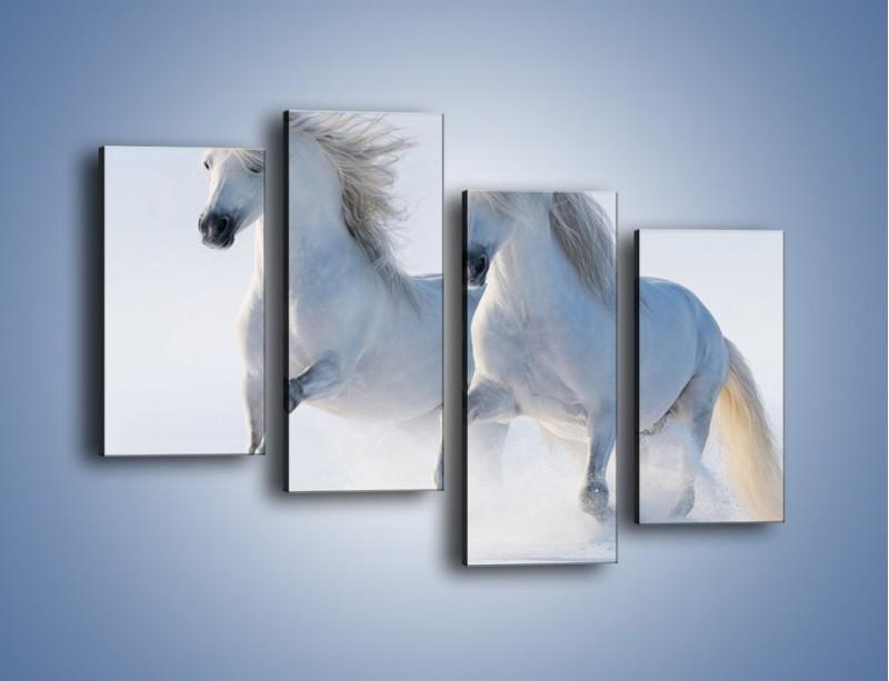 Obraz na płótnie – Gonitwa konna w bieli – czteroczęściowy Z240W2