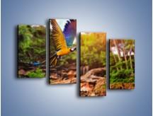 Obraz na płótnie – Kolorowa papuga w locie – czteroczęściowy Z280W2