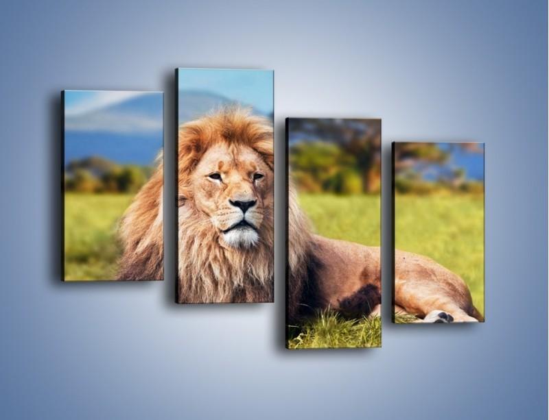 Obraz na płótnie – Dostojny lew na sawannie – czteroczęściowy Z282W2