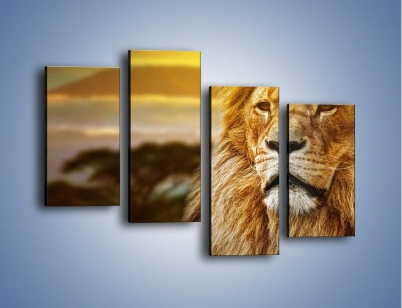Obraz na płótnie – Dojrzały wiek lwa – czteroczęściowy Z303W2