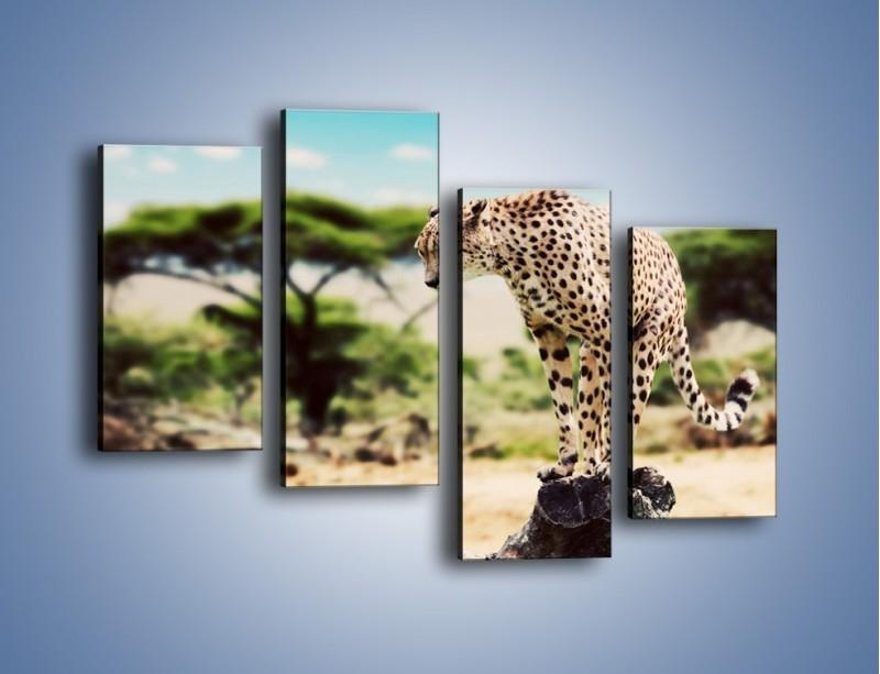 Obraz na płótnie – Cała zwinność geparda – czteroczęściowy Z315W2