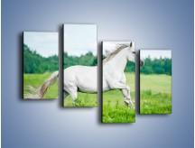 Obraz na płótnie – Biały koń i leśna polana – czteroczęściowy Z317W2