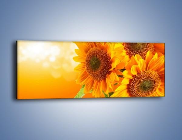 Obraz na płótnie – Słonecznik o wschodzie słońca – jednoczęściowy panoramiczny K109