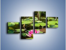 Obraz na płótnie – Ciemno-różowy nenufar na wodzie – czteroczęściowy K014W3
