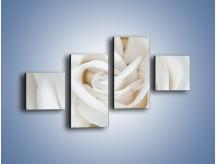 Obraz na płótnie – Biel róży za dnia – czteroczęściowy K709W3