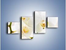 Obraz na płótnie – Białe storczyki blisko siebie – czteroczęściowy K811W3
