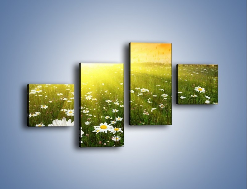 Obraz na płótnie – Łąka stokrotek o zachodzie słońca – czteroczęściowy KN009W3