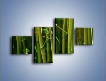 Obraz na płótnie – Bambusowe łodygi z bliska – czteroczęściowy KN118W3