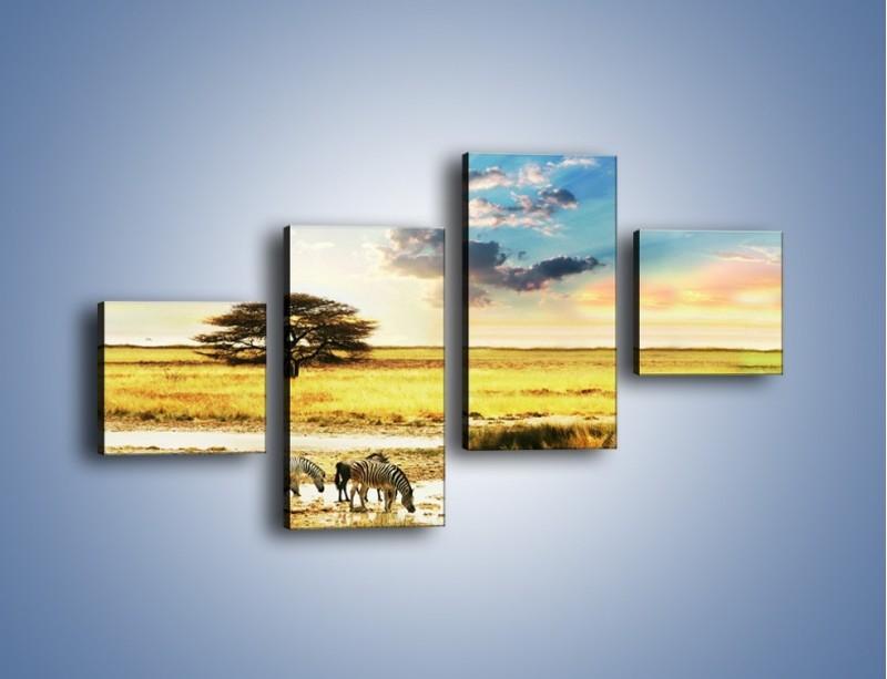Obraz na płótnie – Zebry na sawannie – czteroczęściowy KN1298AW3