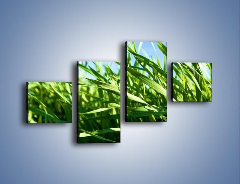 Obraz na płótnie – Wiatr w łodygach – czteroczęściowy KN176W3