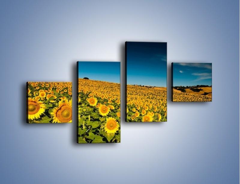 Obraz na płótnie – Słonecznikowe uśmiechnięte główki – czteroczęściowy KN205W3