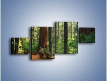 Obraz na płótnie – Chodźmy do lasu – czteroczęściowy KN611W3