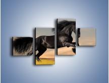 Obraz na płótnie – Czarny koń w galopie – czteroczęściowy Z008W3