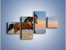 Obraz na płótnie – Brązowy koń na pustyni – czteroczęściowy Z011W3