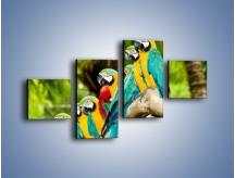 Obraz na płótnie – Kolorowe papugi w szeregu – czteroczęściowy Z029W3