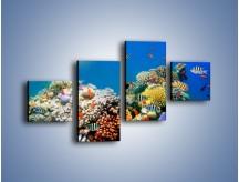 Obraz na płótnie – Fauna i kolorowi towarzysze – czteroczęściowy Z116W3