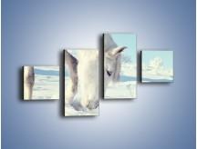 Obraz na płótnie – Arab w śnieżnym puchu – czteroczęściowy Z144W3