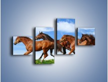 Obraz na płótnie – Galopujące stado brązowych koni – czteroczęściowy Z172W3